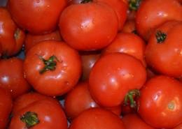 鲜红的西红柿图片_12张
