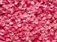 唯美玫瑰花浪漫粉色风景高清壁纸