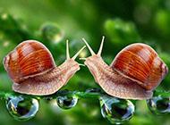 可爱蜗牛动物桌面壁纸高清