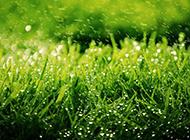 清新草原壁纸绿色护眼