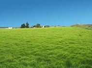 美丽的草原风景摄影图片