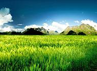 草原风景壁纸优雅迷人