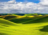 绿色草原风景图片美丽迷人