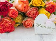 玫瑰花摄影图片素材精致优雅
