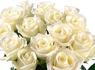 一束白玫瑰唯美圖片