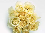 眉目嬌羞的黃玫瑰花瓣圖片
