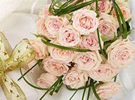 金色丝带礼物与粉玫瑰图片
