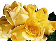 令人如癡如醉的黃玫瑰花束
