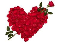 超清的红玫瑰图片素材