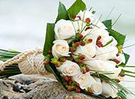 唯美白玫瑰图片素材
