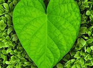 心形葉子綠色植物圖片素材