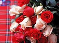 灿烂娇媚的玫瑰花背景素材