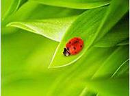 綠色唯美植物葉子圖片