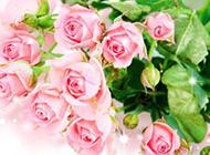 唯美艳粉玫瑰图片素材
