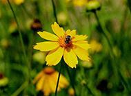 秋天山間黃色野菊花圖片