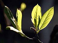 清新綠色樹葉植物圖片素材