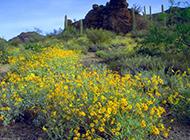 漫山遍野的野菊花圖片