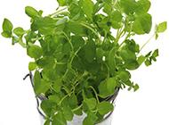室内的绿色植物盆栽素材