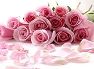 唯美的粉色玫瑰背景图片