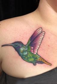 纹身鸟  男生胸前彩色的鸟纹身图片