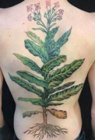 植物纹身 女生后背上翠绿的植物纹身图片
