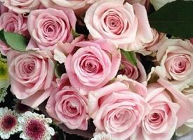 少女心粉色玫瑰花图片