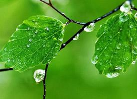 绿色舒服护眼高清手机壁纸