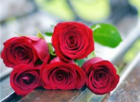 即使玫瑰不叫玫瑰, 也依然芬芳如故。