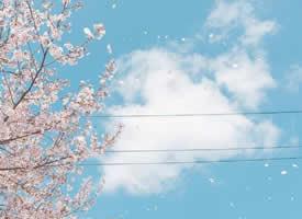 干净纯粹的蓝蓝的天空风景图