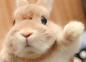 心都要融化了的超级可爱的小兔兔图片