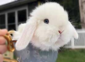 刚满一个月的小兔兔 可爱又呆萌