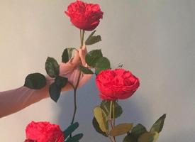 唯美系色彩绚丽的玫瑰图片