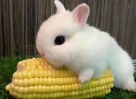 沉迷于这样的小白兔无法自拔