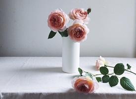 一组超唯美自愈系的玫瑰图片欣赏