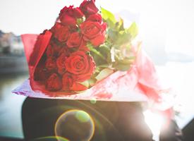 玫瑰花主题意境唯美高清图片欣赏