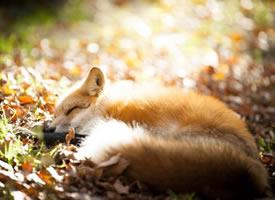 狐狸村的各处就会出现很多神秘的橘色团子
