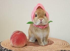一组超级萌的小兔兔来袭