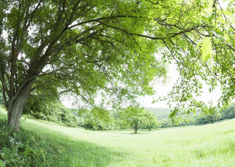 午后的阳光穿过树木图片_36张