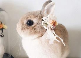 兔兔界的小仙女,羡慕它有这么多好看的头饰