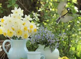 一组超好看艳丽的鲜花图片欣赏