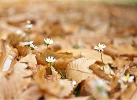 小清新植物鲜花唯美意境高清图片