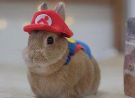 一组可可爱爱的小兔球图片欣赏