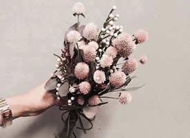 一组美丽的精致小花束图片欣赏