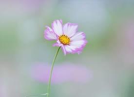 氣不和時少說話,有言必失;心不順時莫做事,做事必敗。
