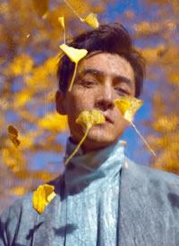 胡歌漫步在金黄落叶中,眼神温柔缱绻,在朦胧的光影中展现英俊脸庞