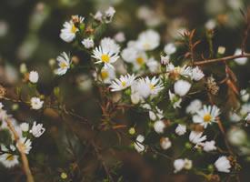有幾種顏色的雛菊圖片欣賞
