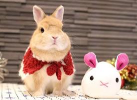 圣诞节了,霓虹国的兔几mitarashi已经换上了美美的圣诞套装 ????