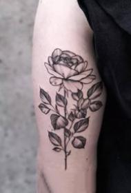 点刺花卉:18张点刺风格的花卉纹身图案