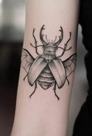 精致的一组小昆虫纹身图片