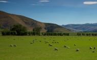 新西兰田园风光图片_14张